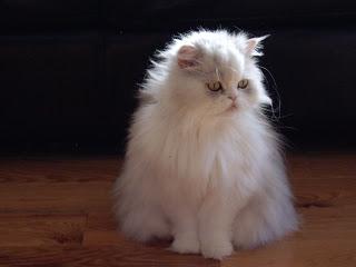 A Magic Cat Named Pyewacket