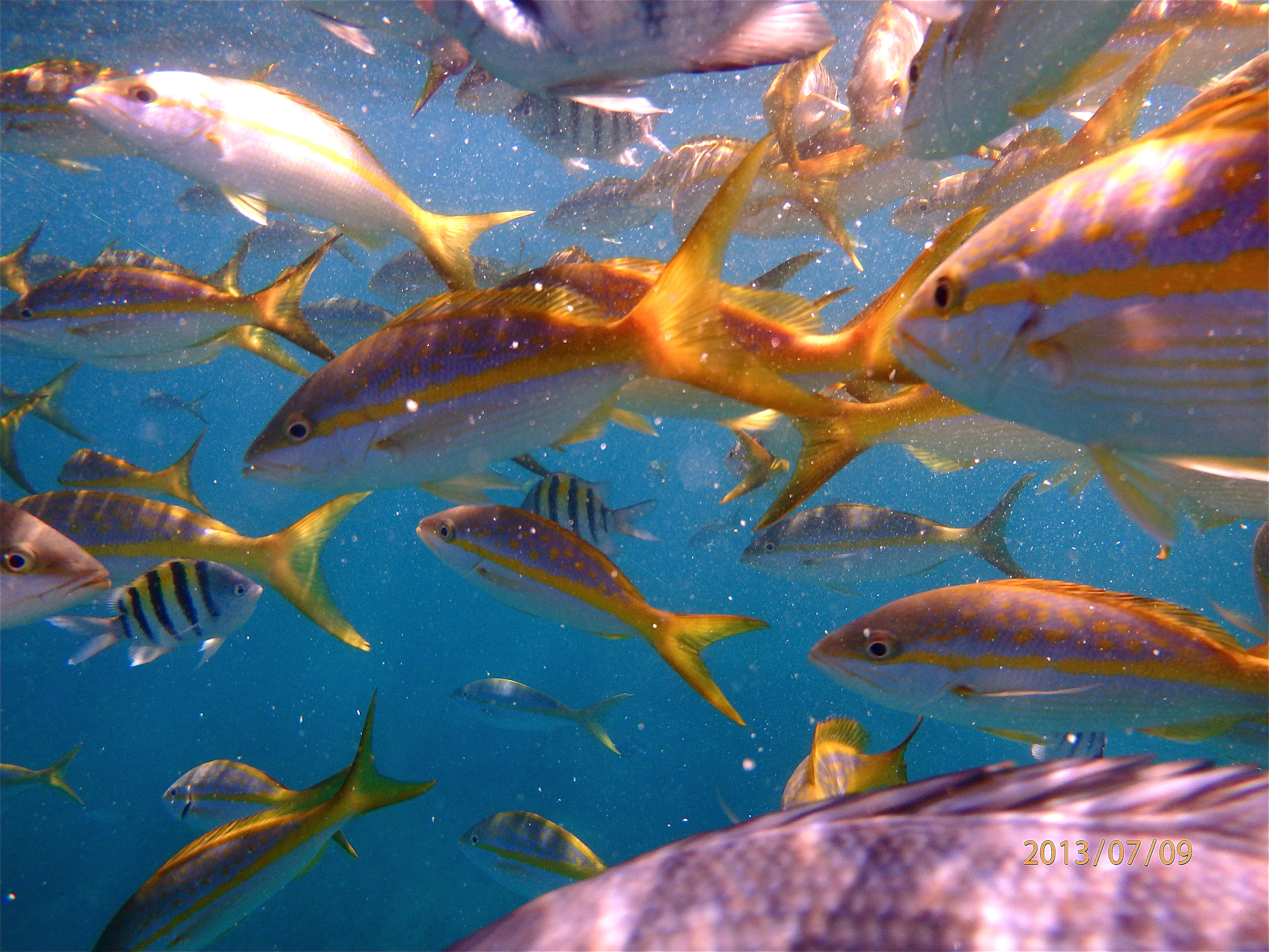 Snorkelling: Varadero Cuba