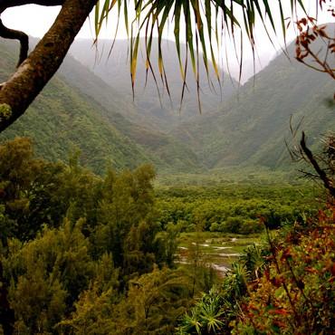 Hawaiian Botanical Garden