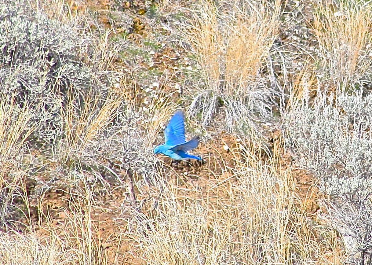 The Wondrous Wildlife of Lac Du Bois