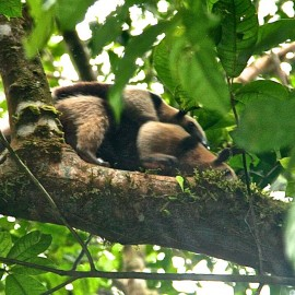 The Wild, Wild Life of Corcovado