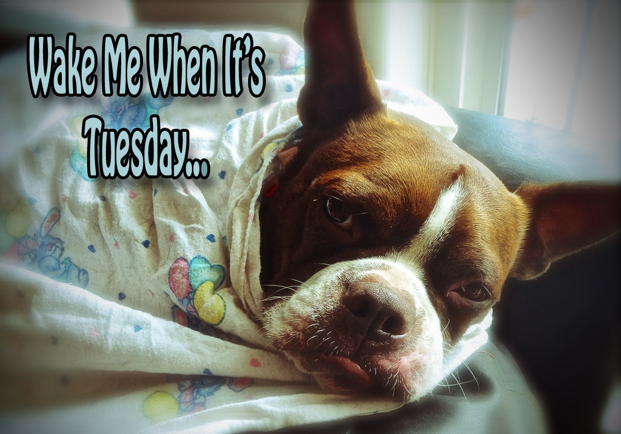 Wake Me When It's Tuesday