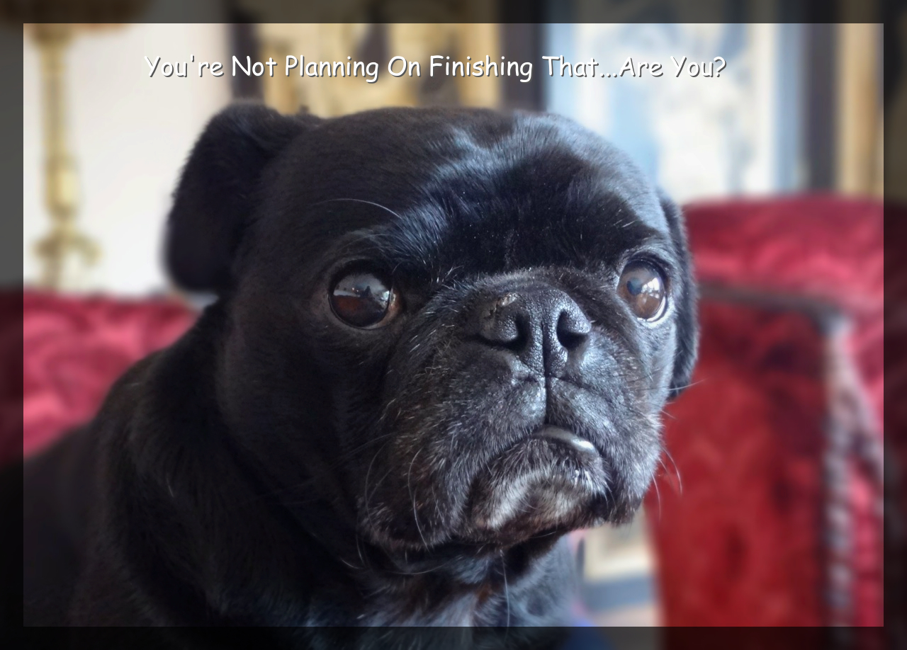 Fernando, One Fabulous Pug!