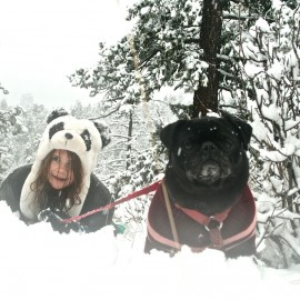 A Pug And A Panda Go Tobogganing
