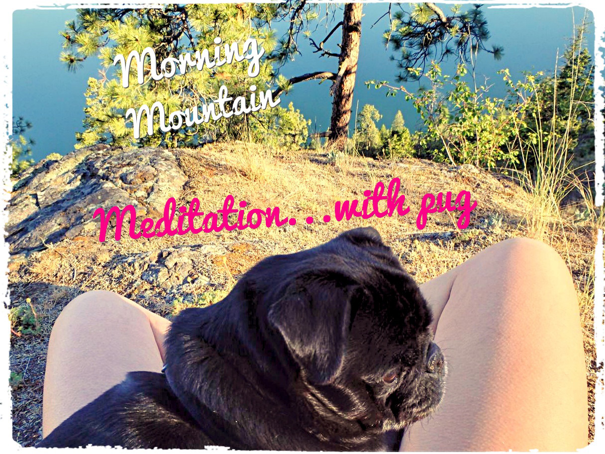 Mountain Meditation…with Pug
