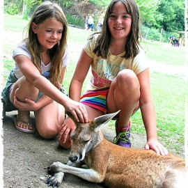 Kangaroo Cuddle Time