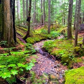 Earth's One & Only Inland Temperate Rainforest