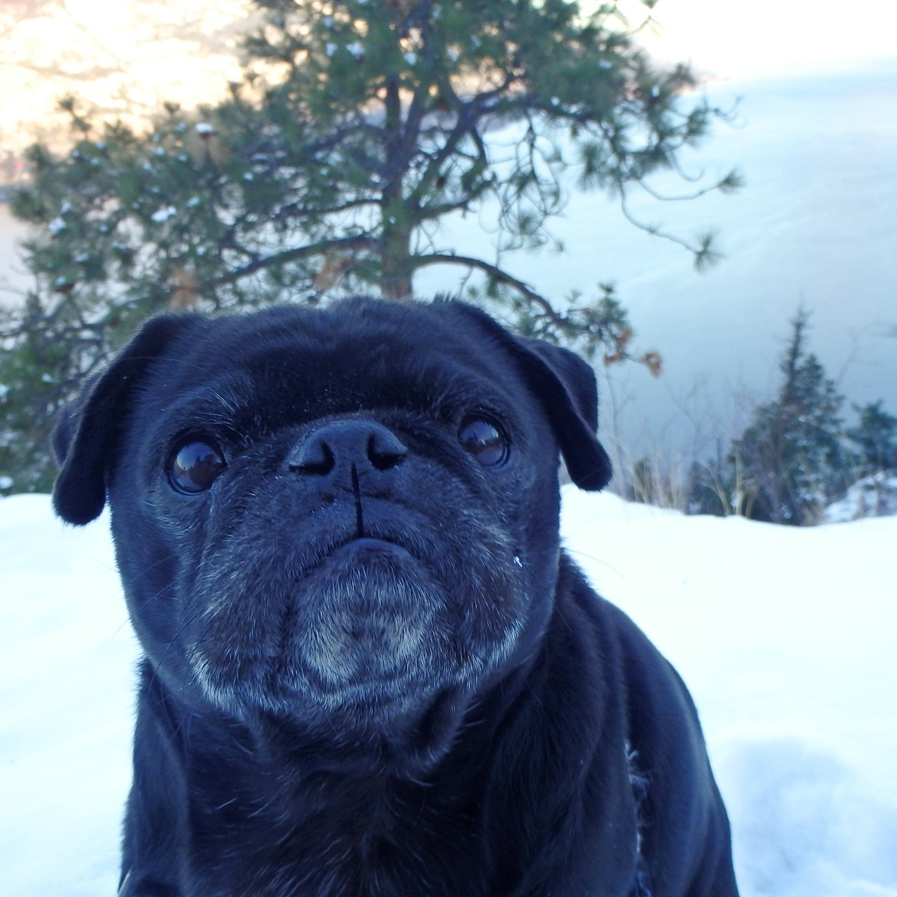 Winter Mountain Meditation (With Pug)