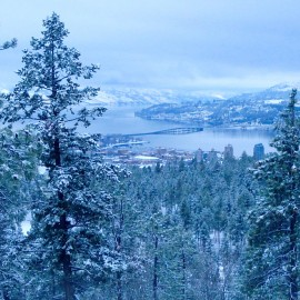 The Forest Never Disappoints: A Tobogganing Adventure
