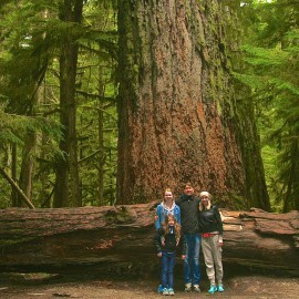 Cathedral Grove: Land Of Giant Trees
