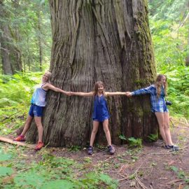 Ancient Cedars of BC's Inland Temperate Rainforest