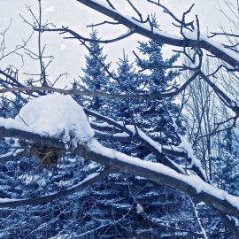 Canadian Birds Build Igloos