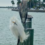 Beachcombing at Pass-A-Grille, Florida