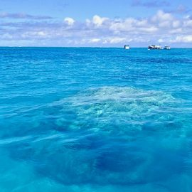 Life Down Under: Great Barrier Reef