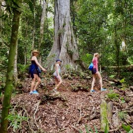 Queensland Rainforests: D'Aguilar National Park
