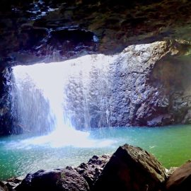 Queensland Ancient Rainforests: Springbrook