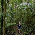 Queensland Rainforests: Lamington National Park