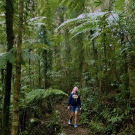 Queensland Rainforests: Lamington National Park